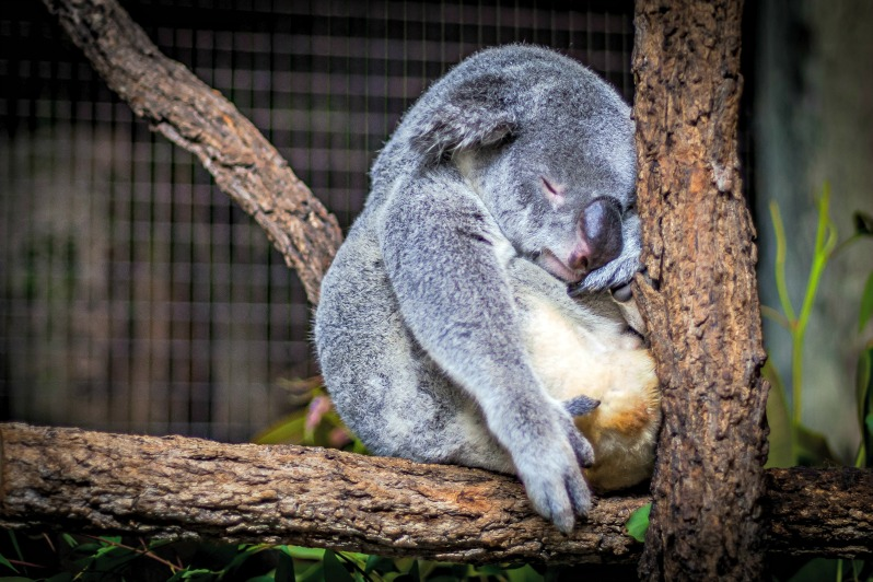 Want to Sleep Better? Synchronize with Nature (Part II) 13 Tips for a Great Night of Sleep