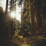 La historia de Rewilding Drum