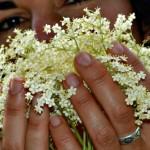 Cómo utilizar las flores de saúco + 5 recetas que alegrarán tu verano