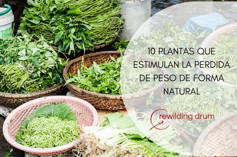 10 PLANTAS QUE ESTIMULAN LA PÉRDIDA DE PESO DE FORMA NATURAL